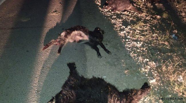 Adana'da 3 aracın çarptığı sürüdeki 23 keçi telef oldu