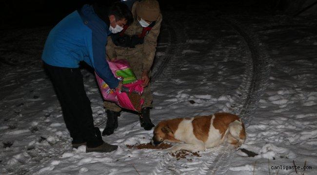 Ardahan'da Mehmetçik karla kaplanan doğada yiyecek bulamayan sokak hayvanlarını unutmadı