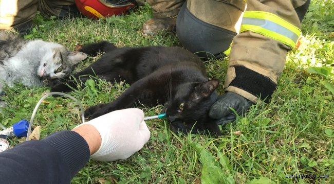 Dumandan etkilenen kedilere kalp masajı ve oksijen desteğiyle müdahale ettiler