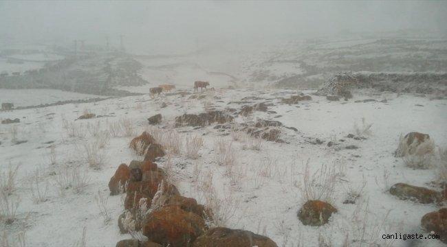 Kars'ta yüksek rakımdaki köyler beyaza büründü
