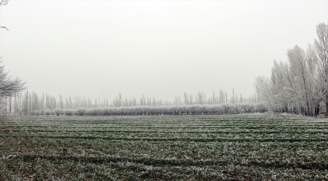 Doğu Anadolu'da dondurucu soğuklar etkili oluyor