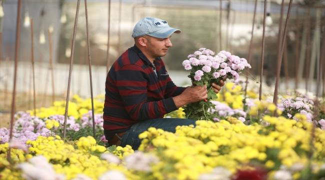Filistinli Mümin, nadir çiçek türleri üreterek İsrail'in bu alandaki tekeliyle mücadele ediyor