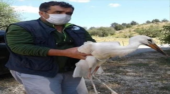 Kastamonu'da geçen yıl 79 yaban hayvanı tedavi edildi