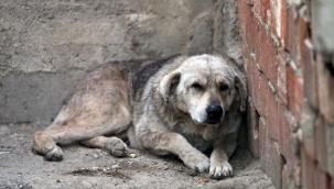 Kayseri Olay: Köpek kavgası nedeniyle akrabasını silahla yaralayan sanığa 8 yıl 1 ay hapis