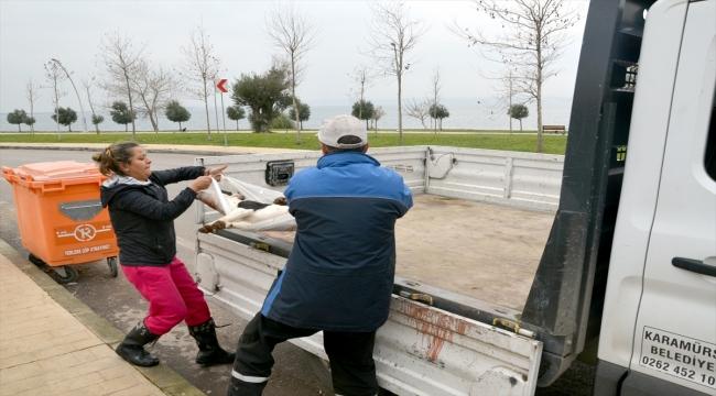 Kocaeli'de 3 sokak köpeğinin ölümüne ilişkin soruşturma
