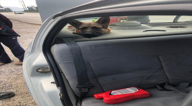 Muğla'da bagaja konulan köpeğin başı hoparlör boşluğuna sıkıştı