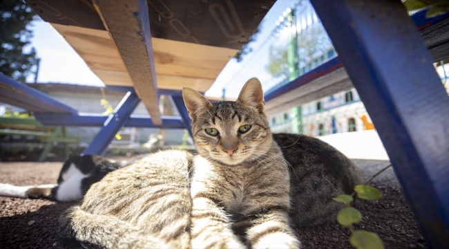 """Antalya'da hayata geçirilen """"kedi apartmanı"""" ile sokak kedileri güvende olacak"""
