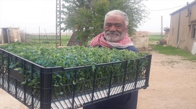 Türkiye'nin desteğiyle Barış Pınarı Harekatı bölgesinde tarımsal çeşitlilik artırılıyor