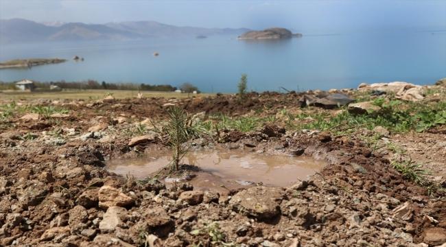 Van'da ıslah edilen vahşi çöp depolama alanı ağaçlandırılıyor