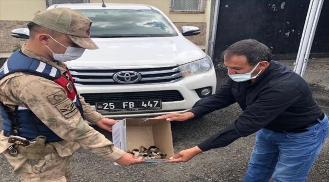 Ardahan'da sosyal medyadan yavru angut kuşlarını satmaya çalışan şüpheliye ceza