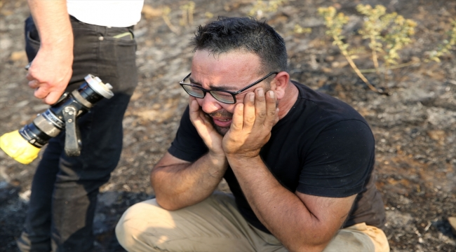 GÜNCELLEME 2 - Aydın'da zeytinlik ve ormanlık alanda çıkan yangın kontrol altına alındı
