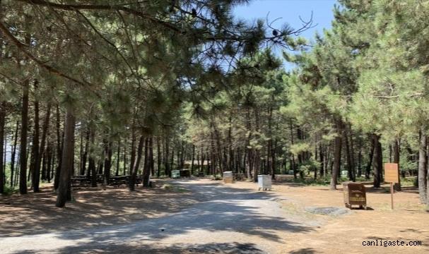 Doğa ile iç içe macera parkı adrenalin tutkunlarını ağırlıyor